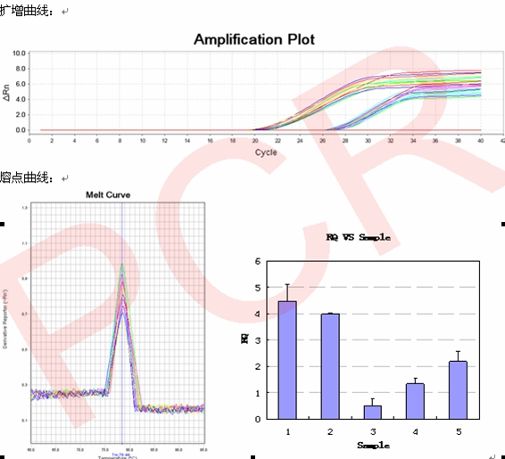 RNA干扰整体实验服务, RNAi基因干扰, SiRNA实验, RNAi